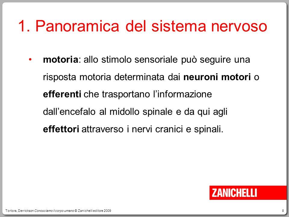 1. Panoramica del sistema nervoso