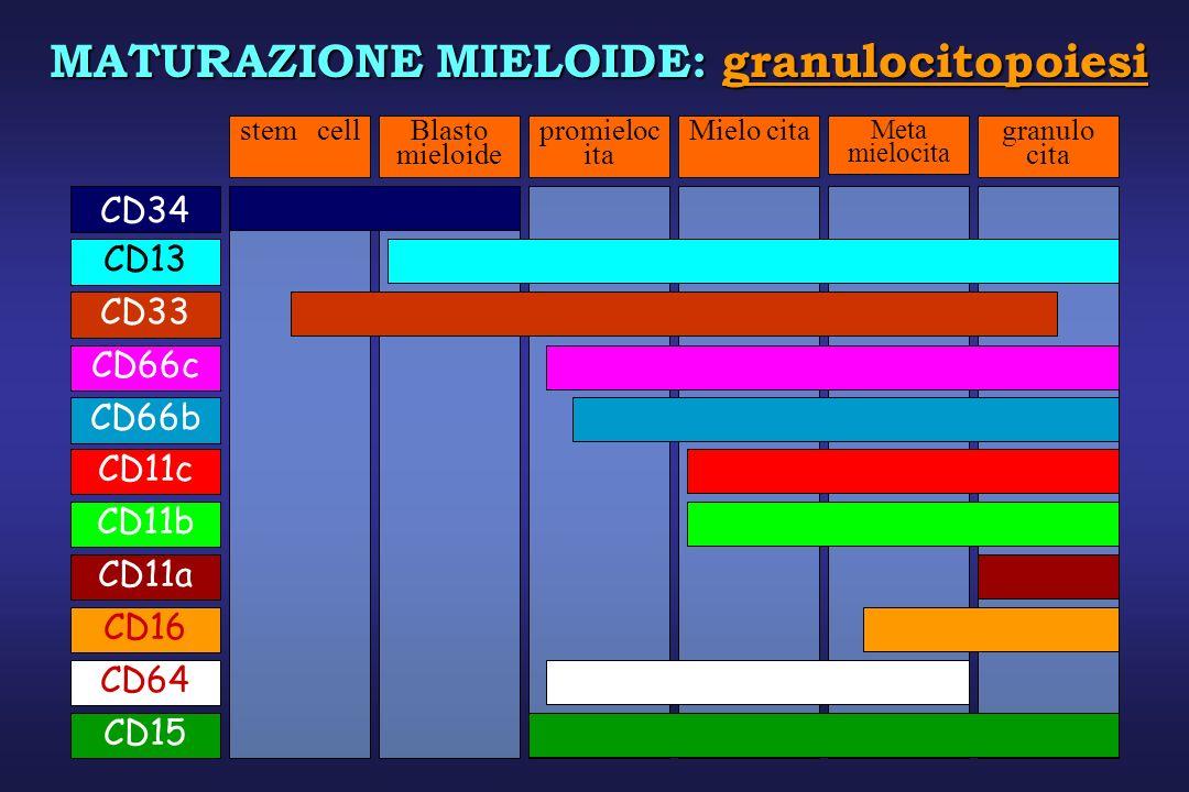 MATURAZIONE MIELOIDE: granulocitopoiesi