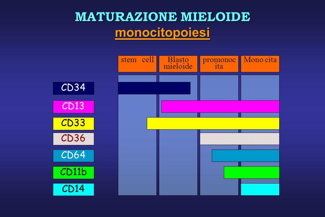 MATURAZIONE MIELOIDE monocitopoiesi CD34 CD13 CD33 CD36 CD64 CD11b