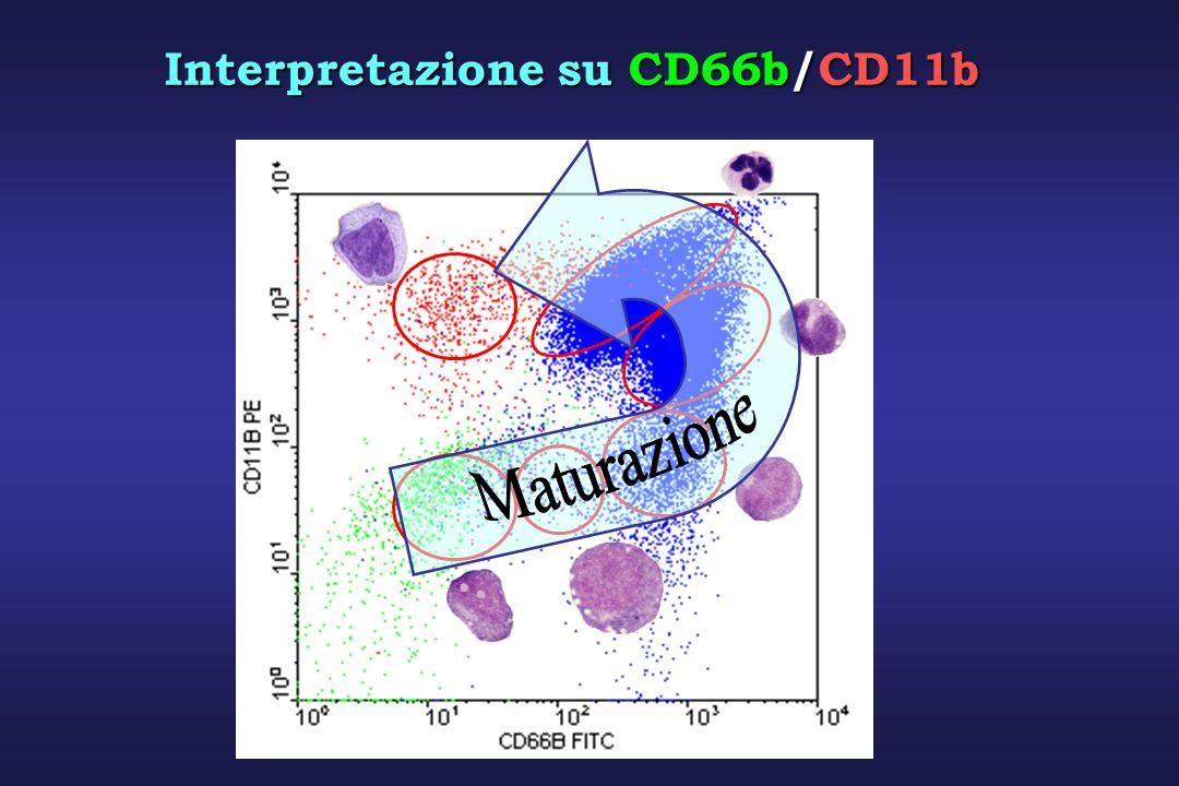 Interpretazione su CD66b/CD11b