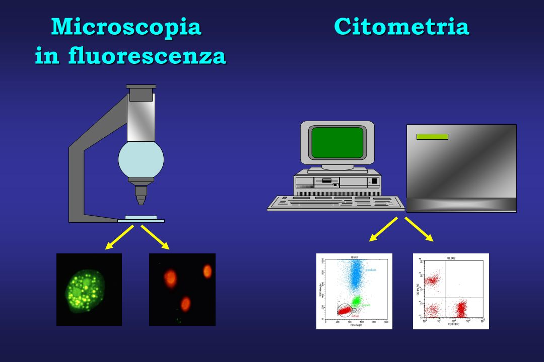 Microscopia Citometria in fluorescenza