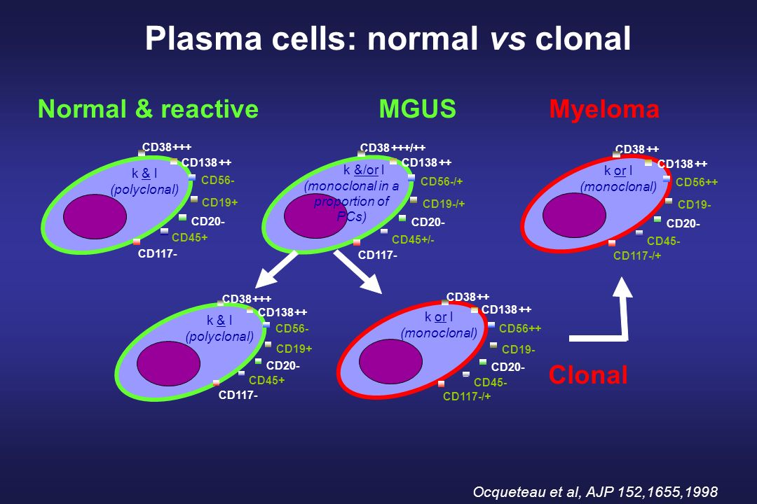 Plasma cells: normal vs clonal