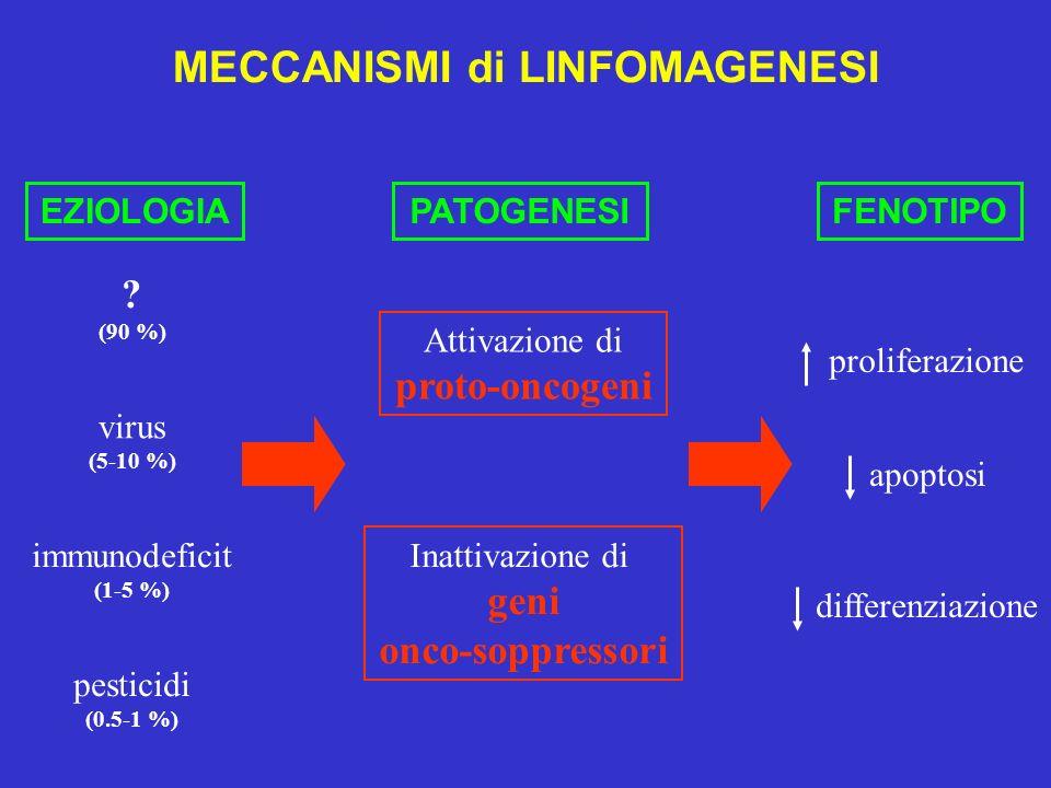 MECCANISMI di LINFOMAGENESI