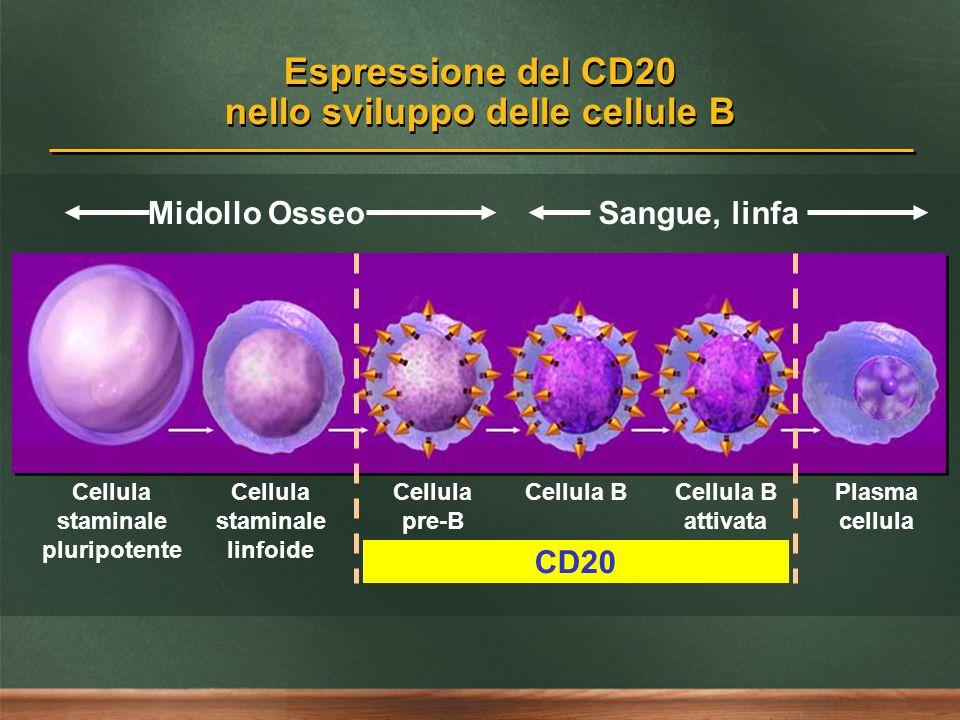 Espressione del CD20 nello sviluppo delle cellule B