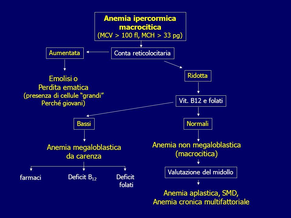 Anemia ipercormica macrocitica