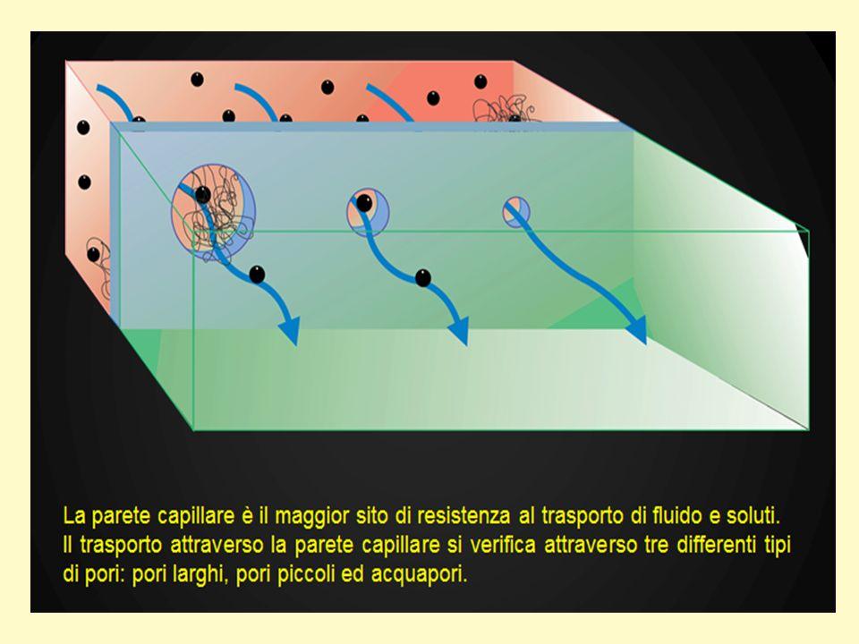 Modelli concettuali elaborati nei passati 40 anni per la valutazione della membrana peritoneale come membrana dialitica