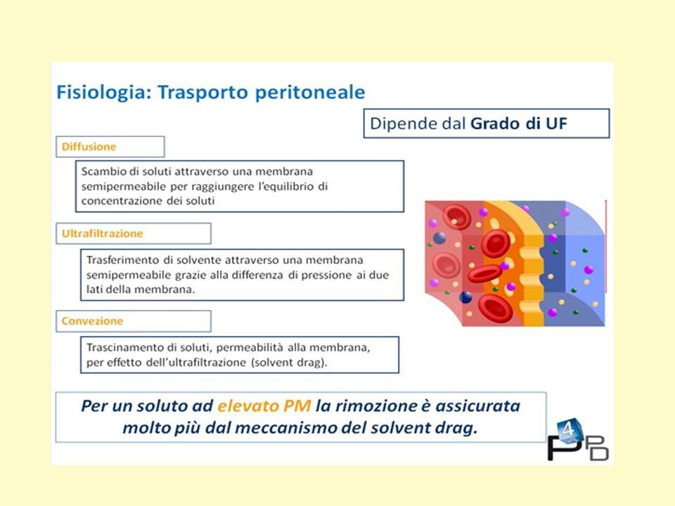 Il peritoneo è una membrana semipermeabile, e il movimento di soluti attraverso di essa obbedisce alle leggi di trasferimento di massa, quali la diffusione, l'ultrafiltrazione e la convezione.