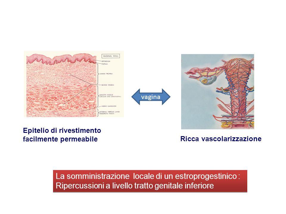 Ricca vascolarizzazione