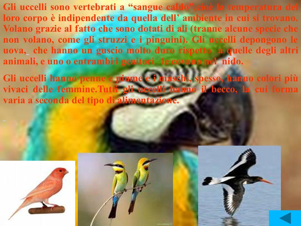 Gli uccelli sono vertebrati a sangue caldo ,cioè la temperatura del loro corpo è indipendente da quella dell' ambiente in cui si trovano. Volano grazie al fatto che sono dotati di ali (tranne alcune specie che non volano, come gli struzzi e i pinguini). Gli uccelli depongono le uova, che hanno un guscio molto duro rispetto a quelle degli altri animali, e uno o entrambi i genitori le covano nel nido.