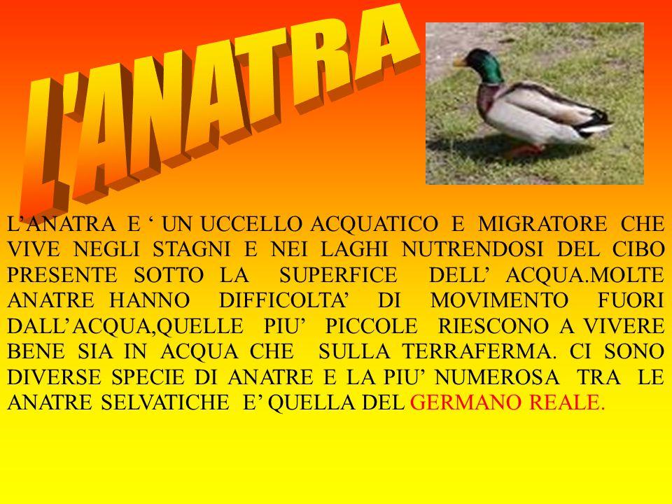 L ANATRA