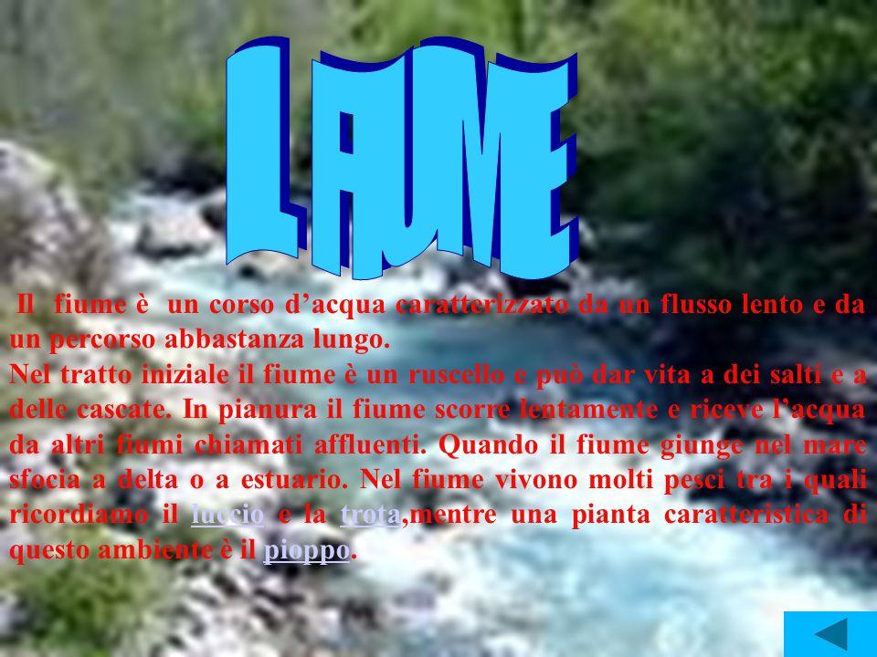 IL FIUME Il fiume è un corso d'acqua caratterizzato da un flusso lento e da un percorso abbastanza lungo.
