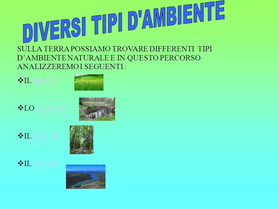 DIVERSI TIPI D AMBIENTE