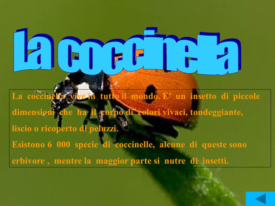 La coccinella La coccinella vive in tutto il mondo. E' un insetto di piccole.