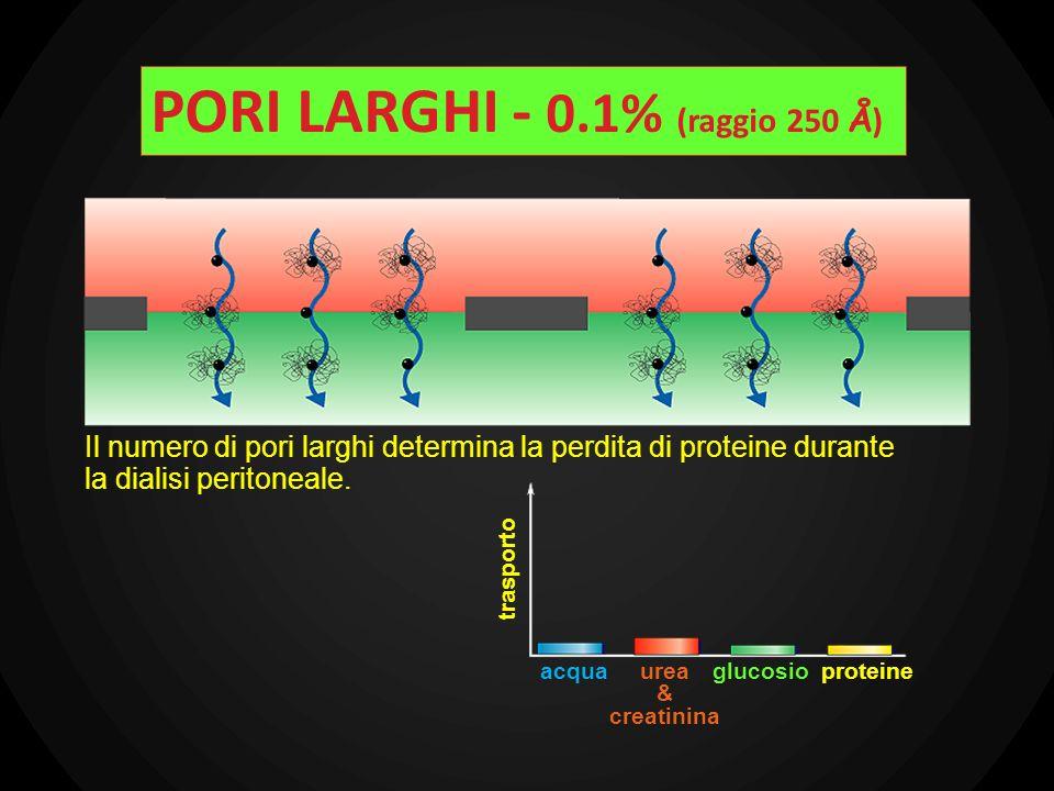 PORI LARGHI - 0.1% (raggio 250 Å)