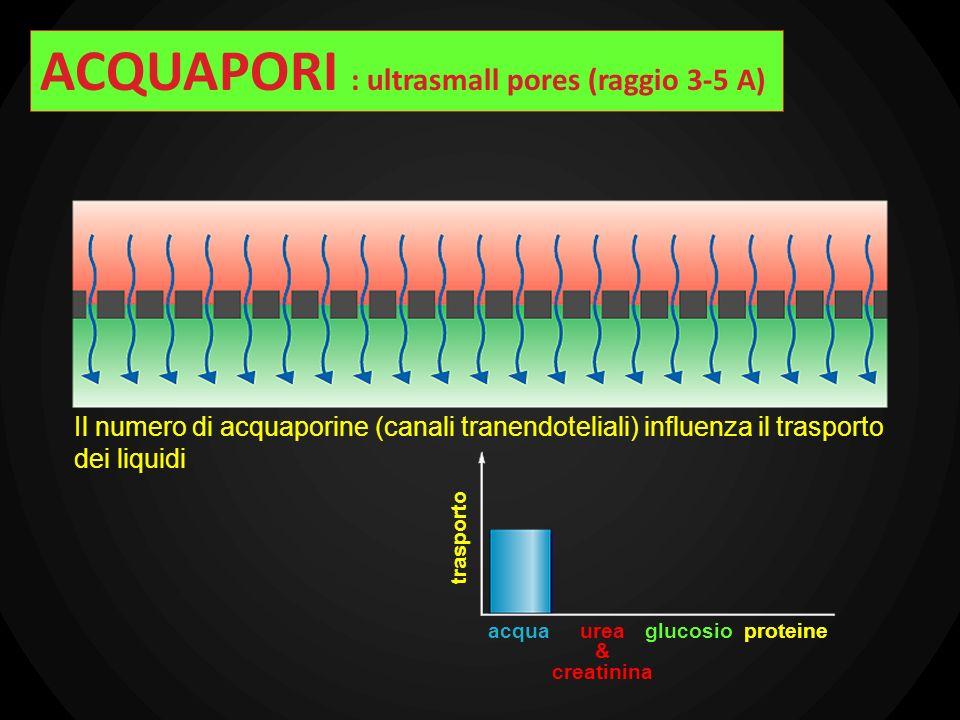 ACQUAPORI : ultrasmall pores (raggio 3-5 A)
