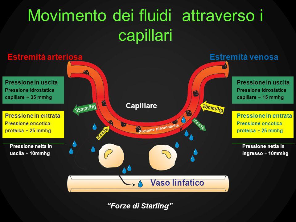 Movimento dei fluidi attraverso i capillari