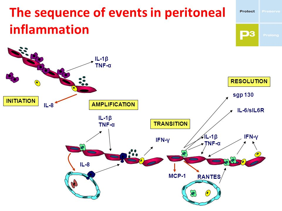 The sequence of events in peritoneal inflammation