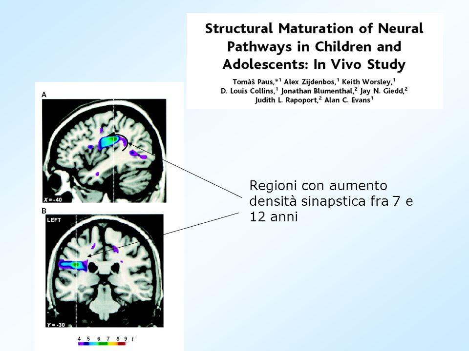 Regioni con aumento densità sinapstica fra 7 e 12 anni