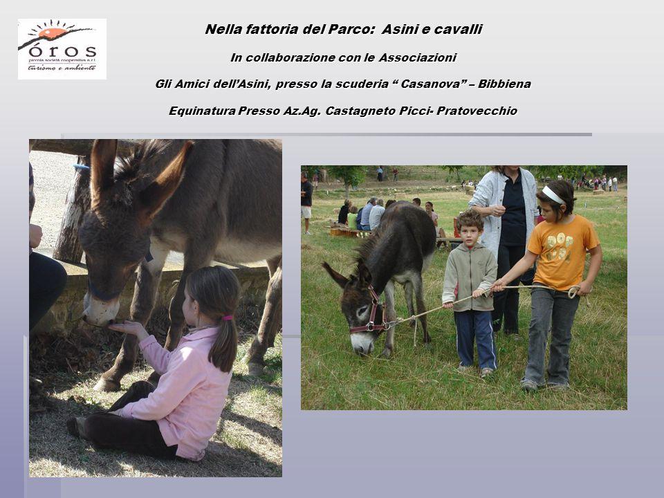 Nella fattoria del Parco: Asini e cavalli In collaborazione con le Associazioni Gli Amici dell'Asini, presso la scuderia Casanova – Bibbiena Equinatura Presso Az.Ag.