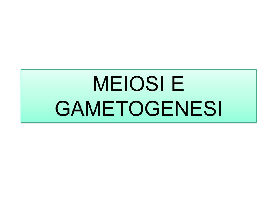 MEIOSI E GAMETOGENESI