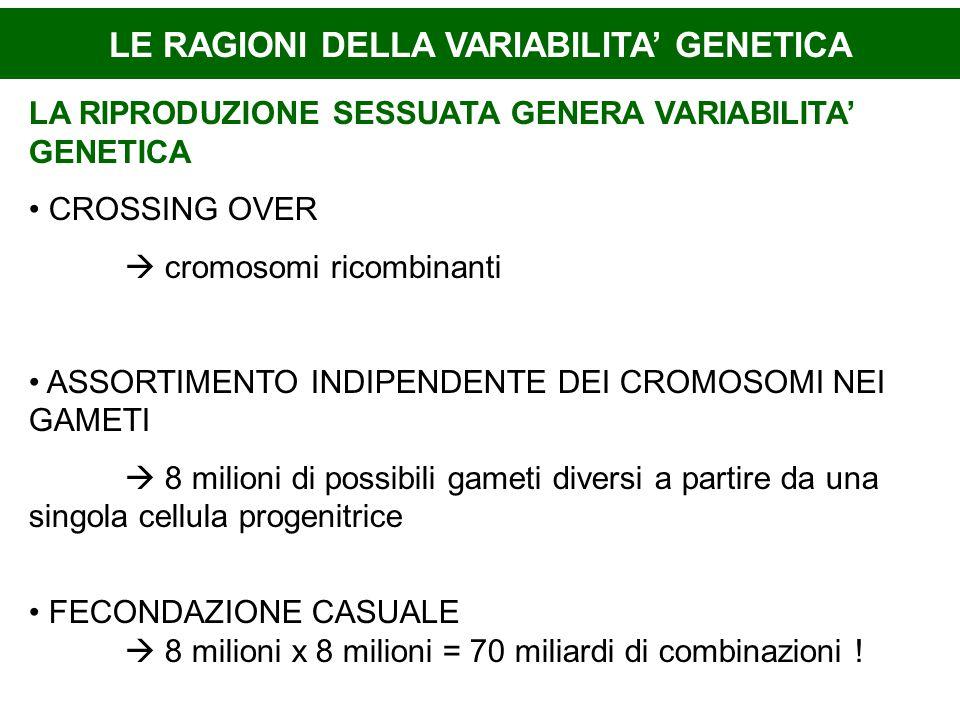 LE RAGIONI DELLA VARIABILITA' GENETICA