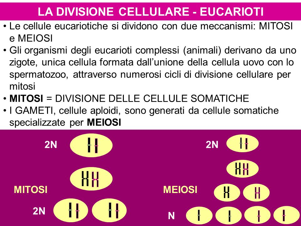 LA DIVISIONE CELLULARE - EUCARIOTI