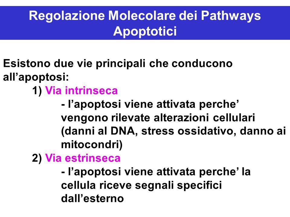 Regolazione Molecolare dei Pathways Apoptotici