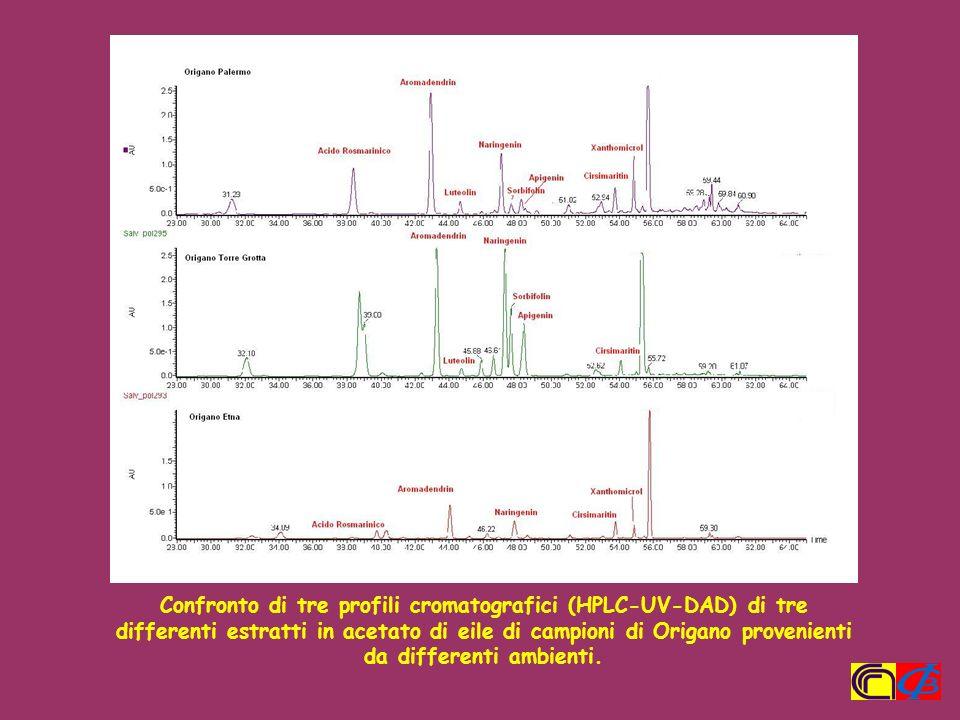 Confronto di tre profili cromatografici (HPLC-UV-DAD) di tre differenti estratti in acetato di eile di campioni di Origano provenienti da differenti ambienti.