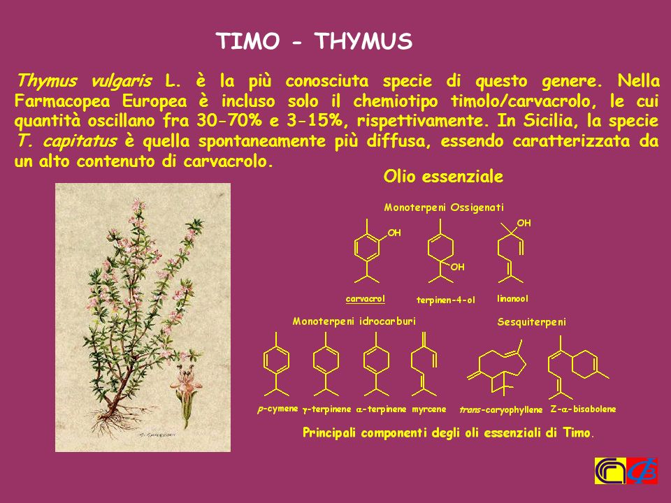 TIMO - THYMUS