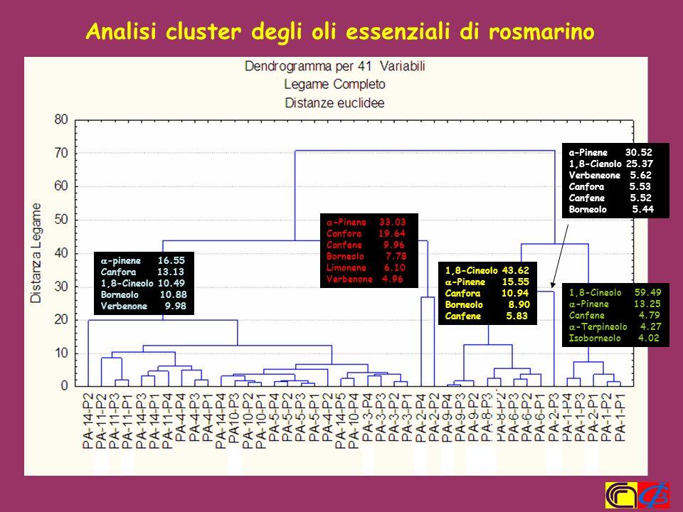 Analisi cluster degli oli essenziali di rosmarino
