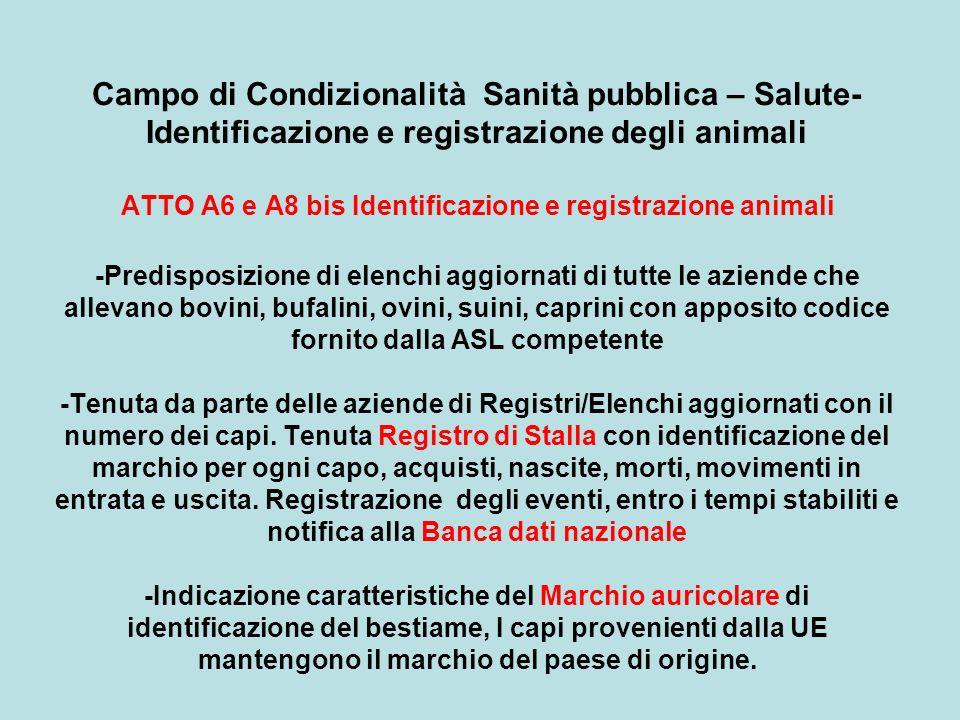 Campo di Condizionalità Sanità pubblica – Salute-Identificazione e registrazione degli animali ATTO A6 e A8 bis Identificazione e registrazione animali -Predisposizione di elenchi aggiornati di tutte le aziende che allevano bovini, bufalini, ovini, suini, caprini con apposito codice fornito dalla ASL competente -Tenuta da parte delle aziende di Registri/Elenchi aggiornati con il numero dei capi.