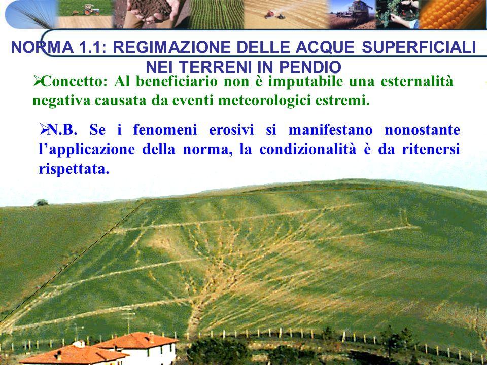 NORMA 1.1: REGIMAZIONE DELLE ACQUE SUPERFICIALI NEI TERRENI IN PENDIO