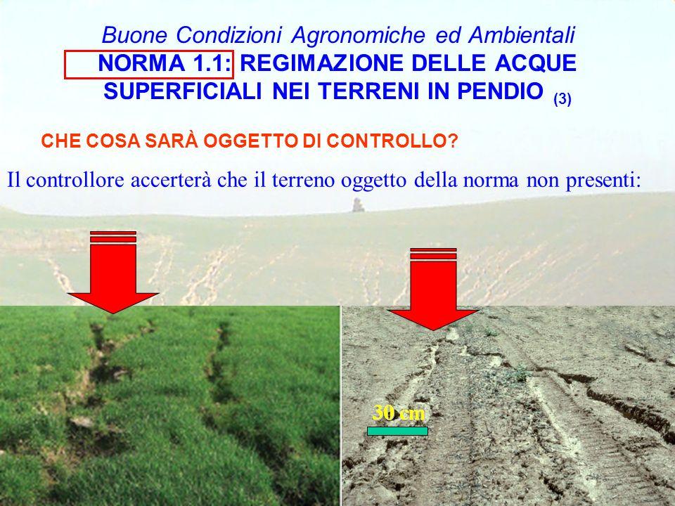 Buone Condizioni Agronomiche ed Ambientali NORMA 1