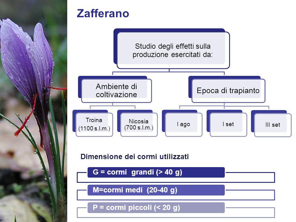 Zafferano Studio degli effetti sulla produzione esercitati da: