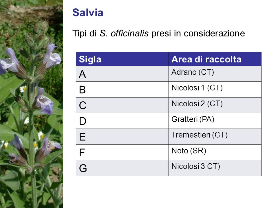 Salvia A B C D E F G Tipi di S. officinalis presi in considerazione
