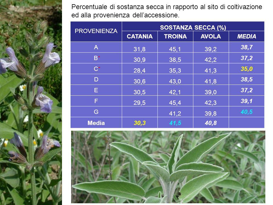 Percentuale di sostanza secca in rapporto al sito di coltivazione ed alla provenienza dell'accessione.
