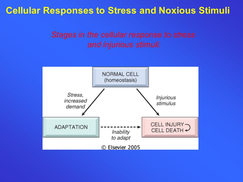 Cellular Responses to Stress and Noxious Stimuli