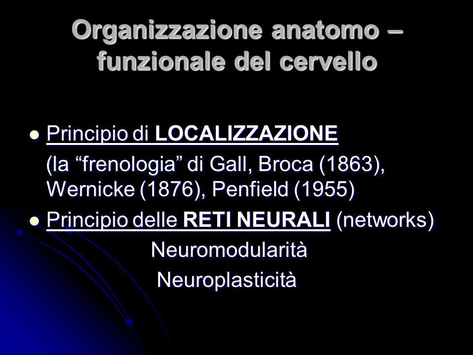Organizzazione anatomo – funzionale del cervello