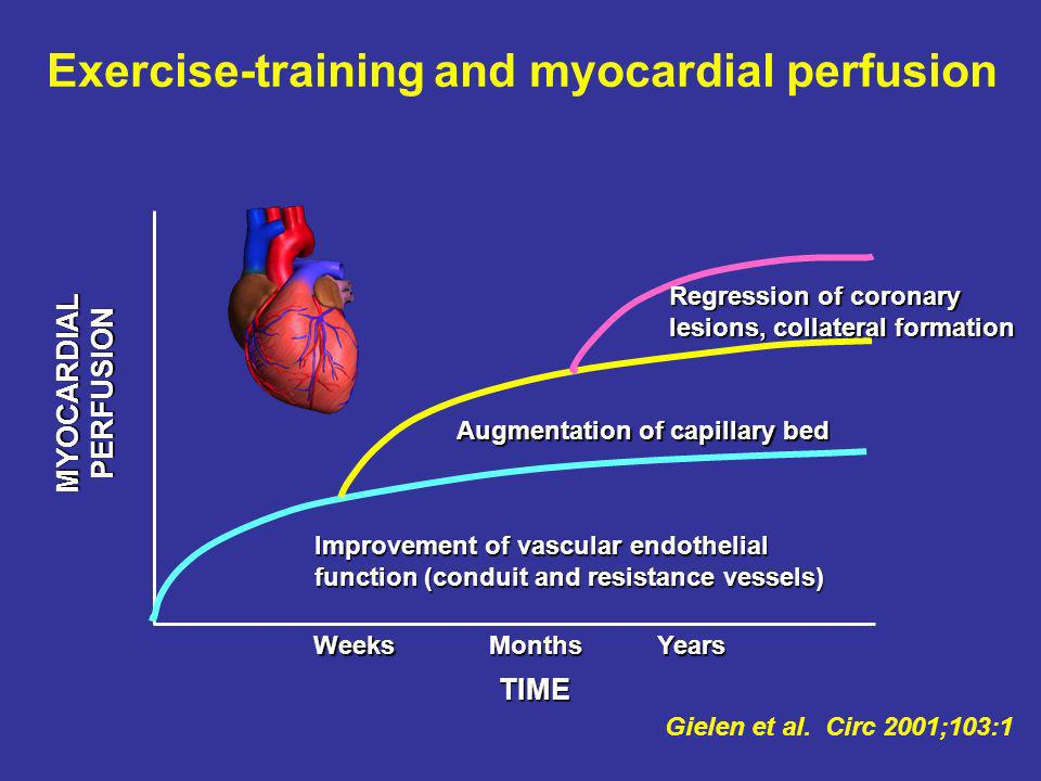 Exercise-training and myocardial perfusion
