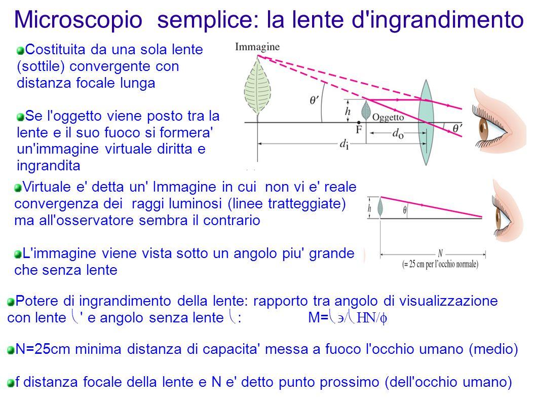 Microscopio semplice: la lente d ingrandimento