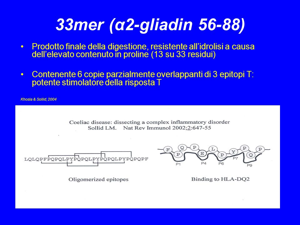 33mer (α2-gliadin 56-88) Prodotto finale della digestione, resistente all'idrolisi a causa dell'elevato contenuto in proline (13 su 33 residui)