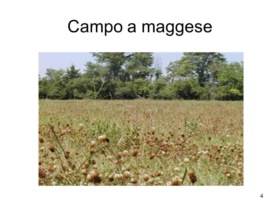 Campo a maggese
