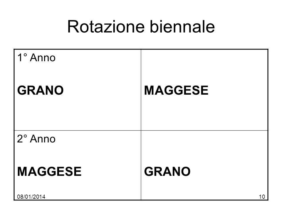 Rotazione biennale 1° Anno GRANO MAGGESE 2° Anno 27/03/2017