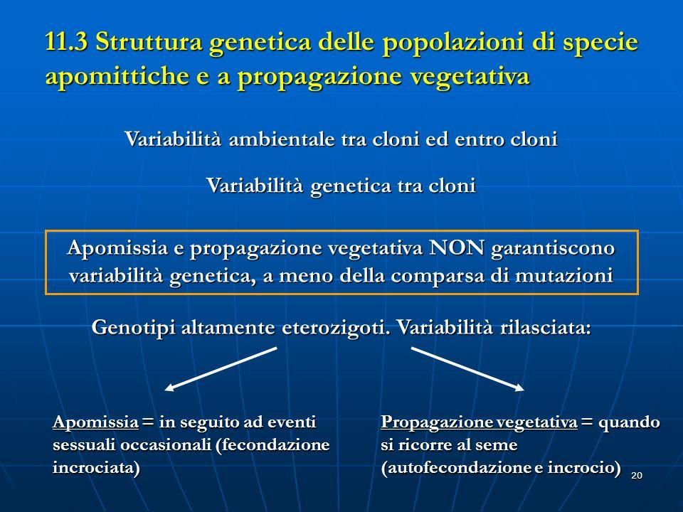11.3 Struttura genetica delle popolazioni di specie apomittiche e a propagazione vegetativa