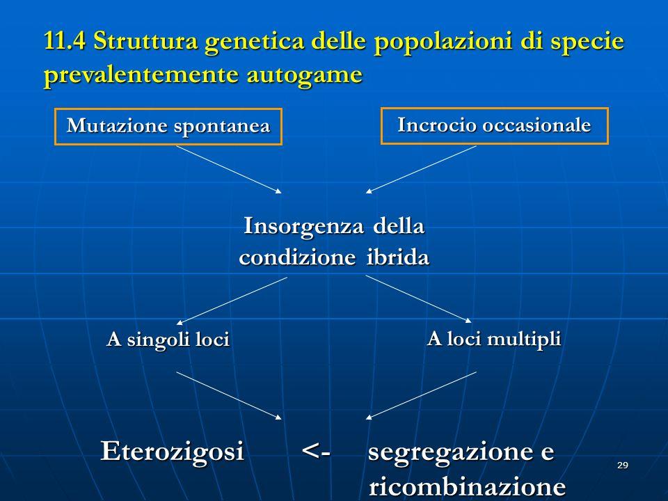 Eterozigosi <- segregazione e ricombinazione