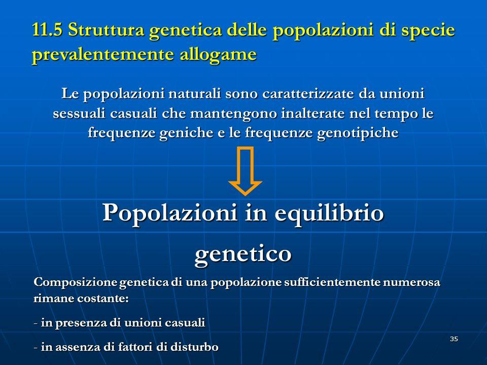Popolazioni in equilibrio