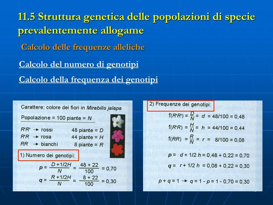 11.5 Struttura genetica delle popolazioni di specie prevalentemente allogame