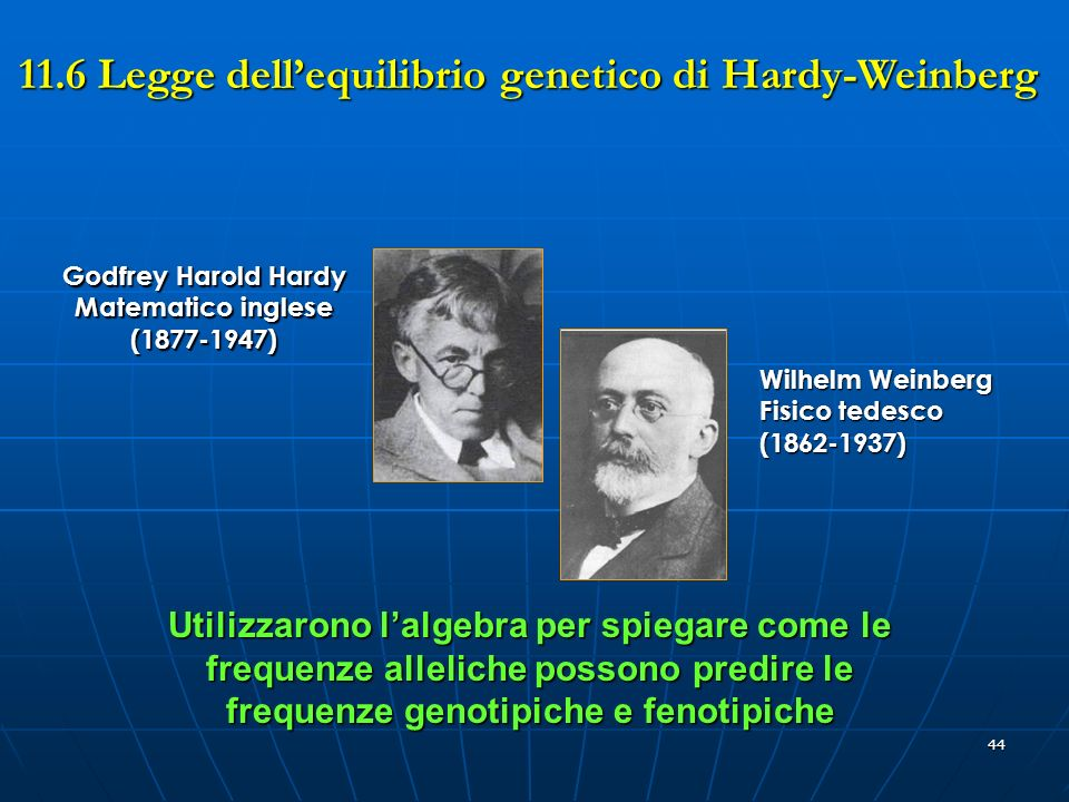 11.6 Legge dell'equilibrio genetico di Hardy-Weinberg