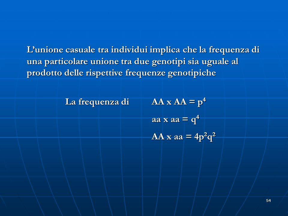 L'unione casuale tra individui implica che la frequenza di una particolare unione tra due genotipi sia uguale al prodotto delle rispettive frequenze genotipiche