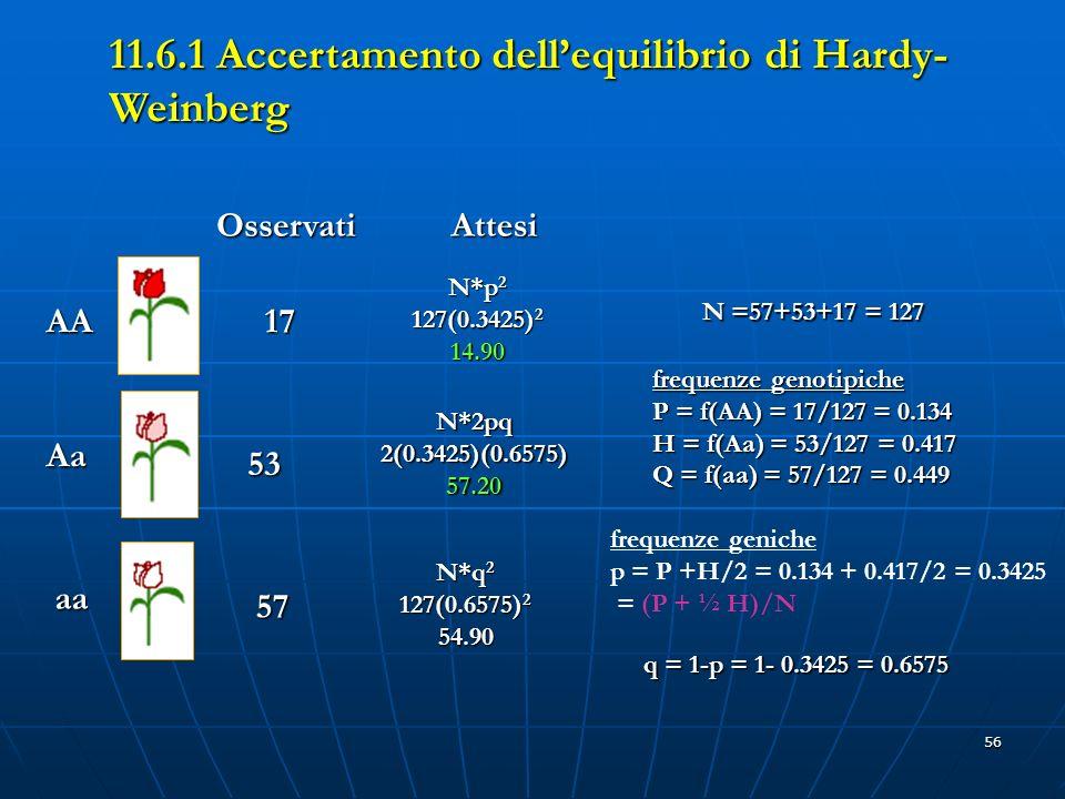 11.6.1 Accertamento dell'equilibrio di Hardy-Weinberg